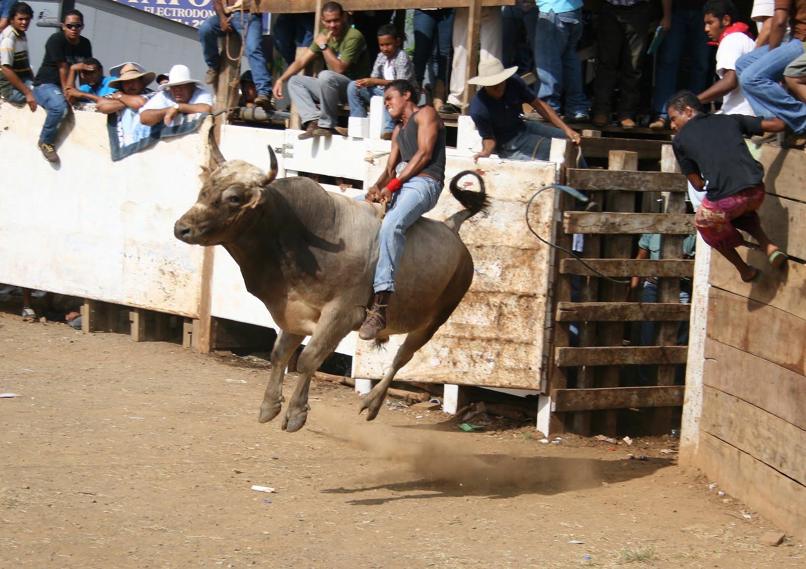 Resultado de imagen para monta de toros guanacaste