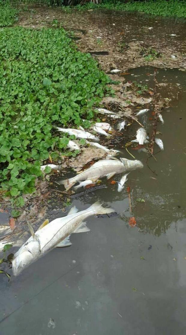 pescados muertos