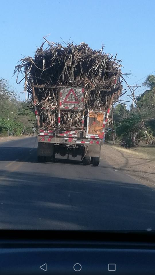 Camion de caña