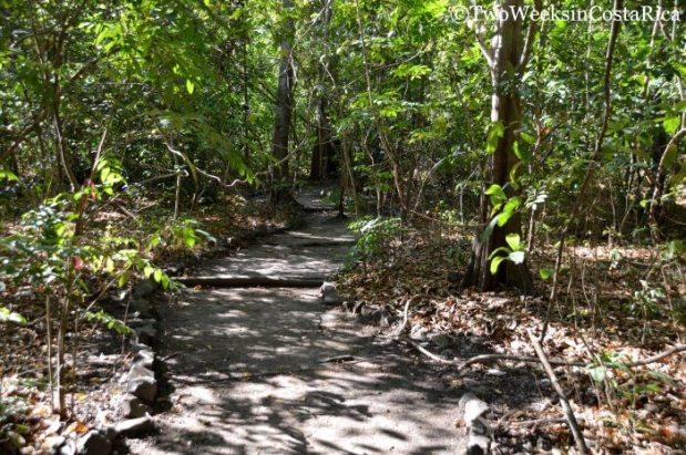 Lomas-Barbudal-Biological-Reserve-Sendero-Gigantes-del-Bosque