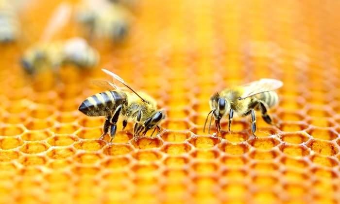 700x420_abejas-enjambre
