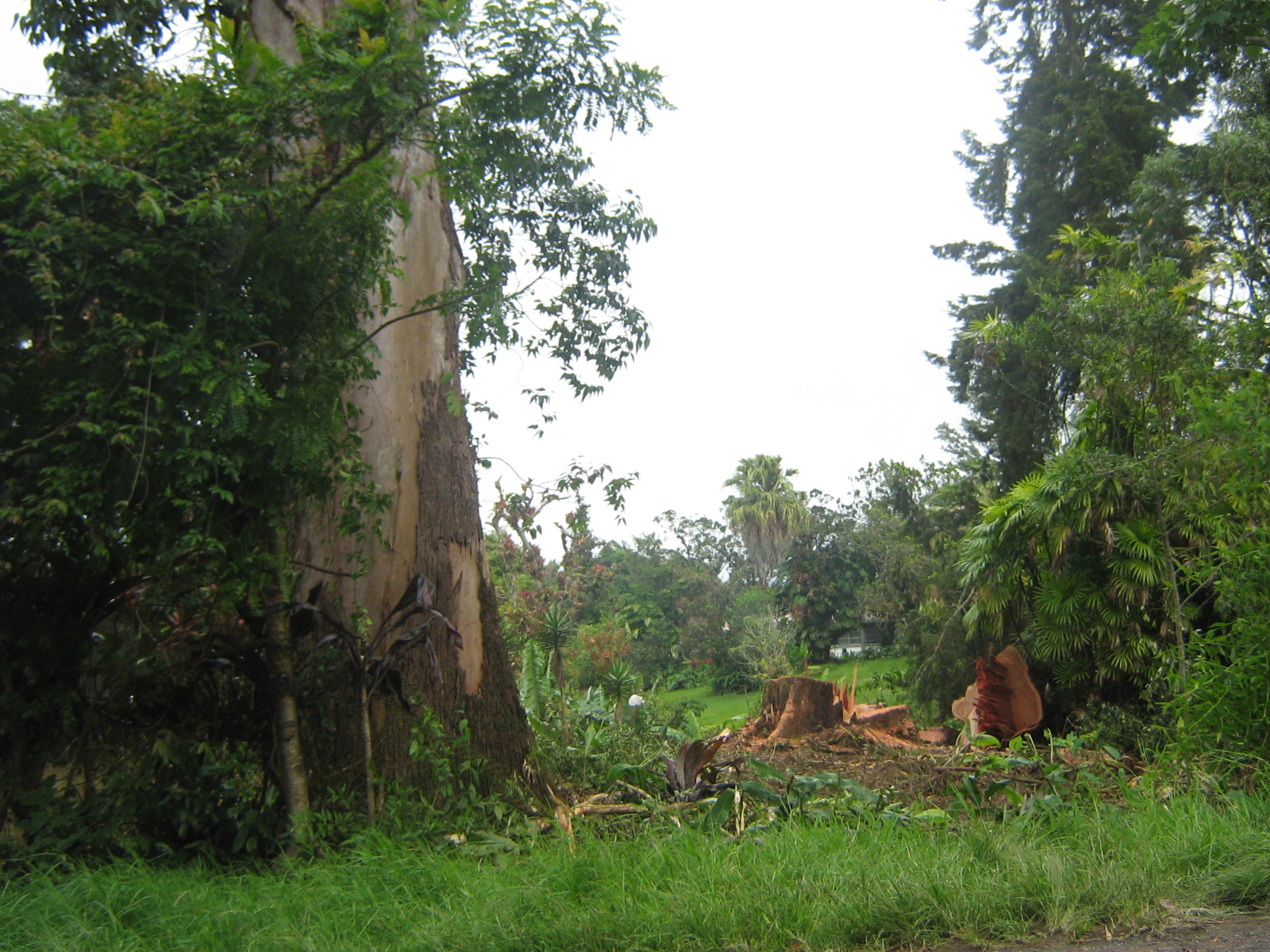 Tala-de-árboles-en-la-Omega-002.jpg